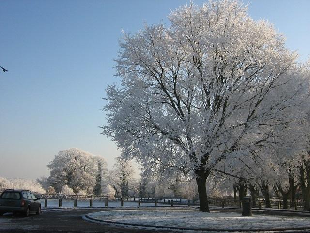 Snow Dec 2010 008