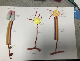 Biology week 2